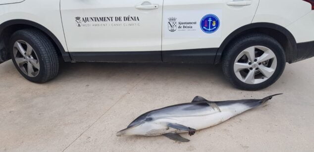 Image: Dolphin found on Punta del Raset beach