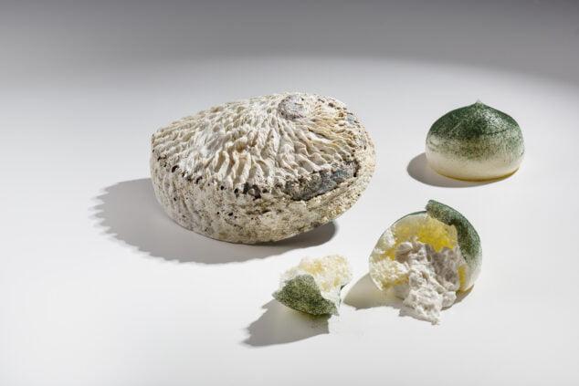 Imagen: Frágil roca de abalon