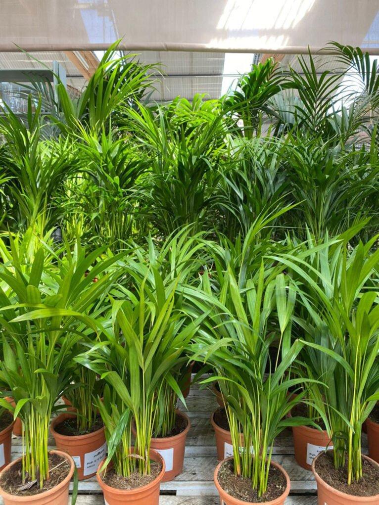 Regala plantas para el Día de la Madre en Dénia - Natura Garden