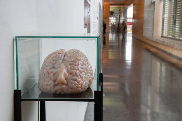 Imagen: Exposición comisariada por Cristina Agàpito