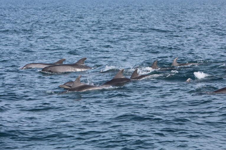 Delfines frente a la costa de Dénia