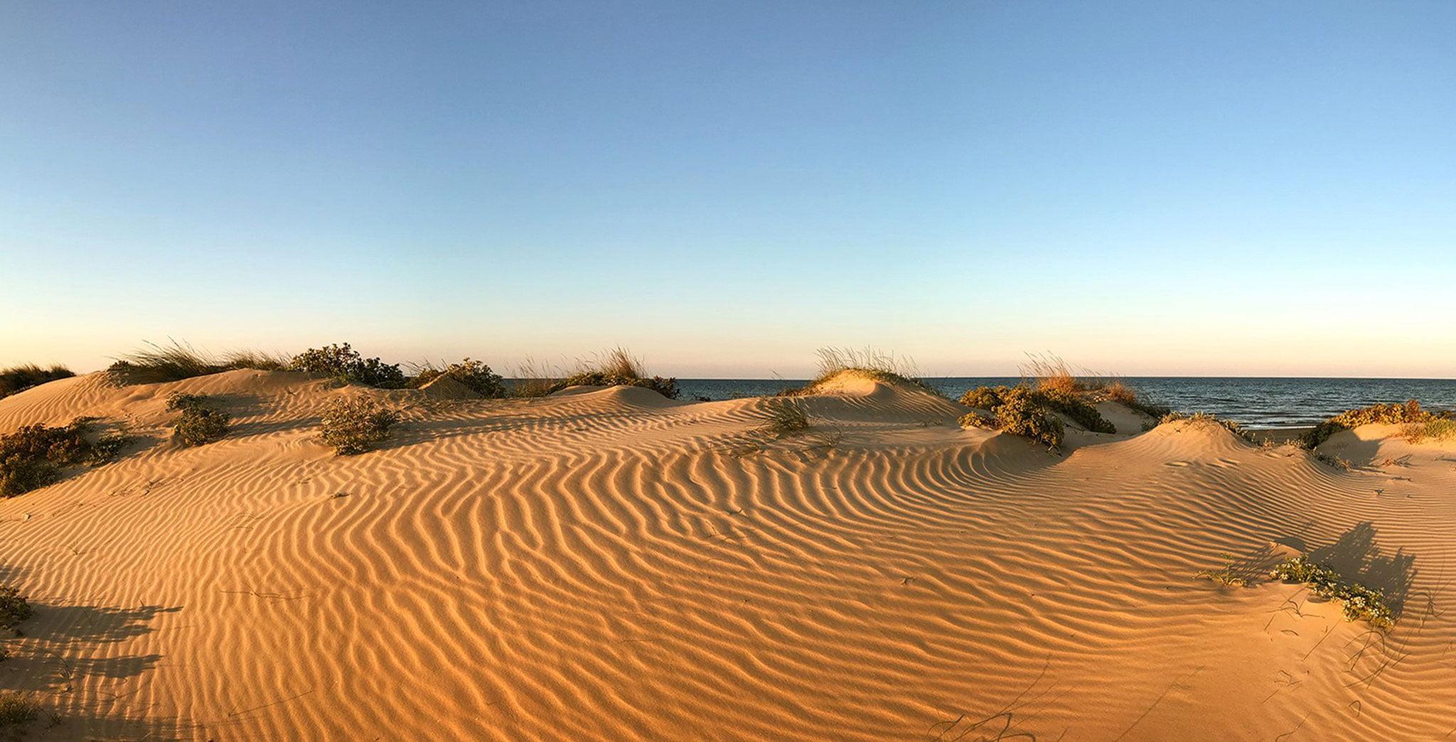 Dunas en el entorno de playa – Oliva Nova