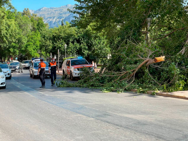 Imagen: Cae la rama de un árbol en Plaza Jaume I