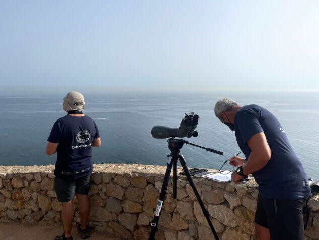 Imagen: Labores del Proyecto Cabo Rorcual de la UPV en Dénia