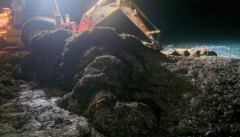 Montón de algas en la playa tras el último temporal