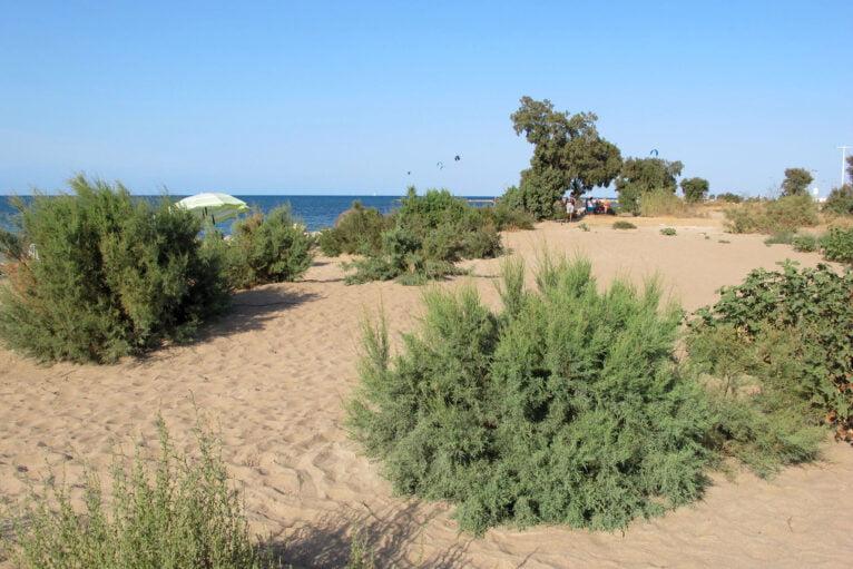 Playa Punta del Raset de Dénia 86